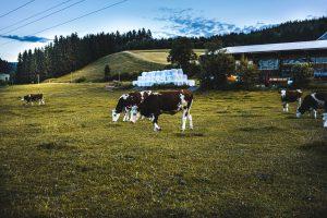 schwarzwald Milch